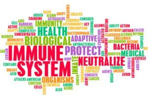 immune system word bank